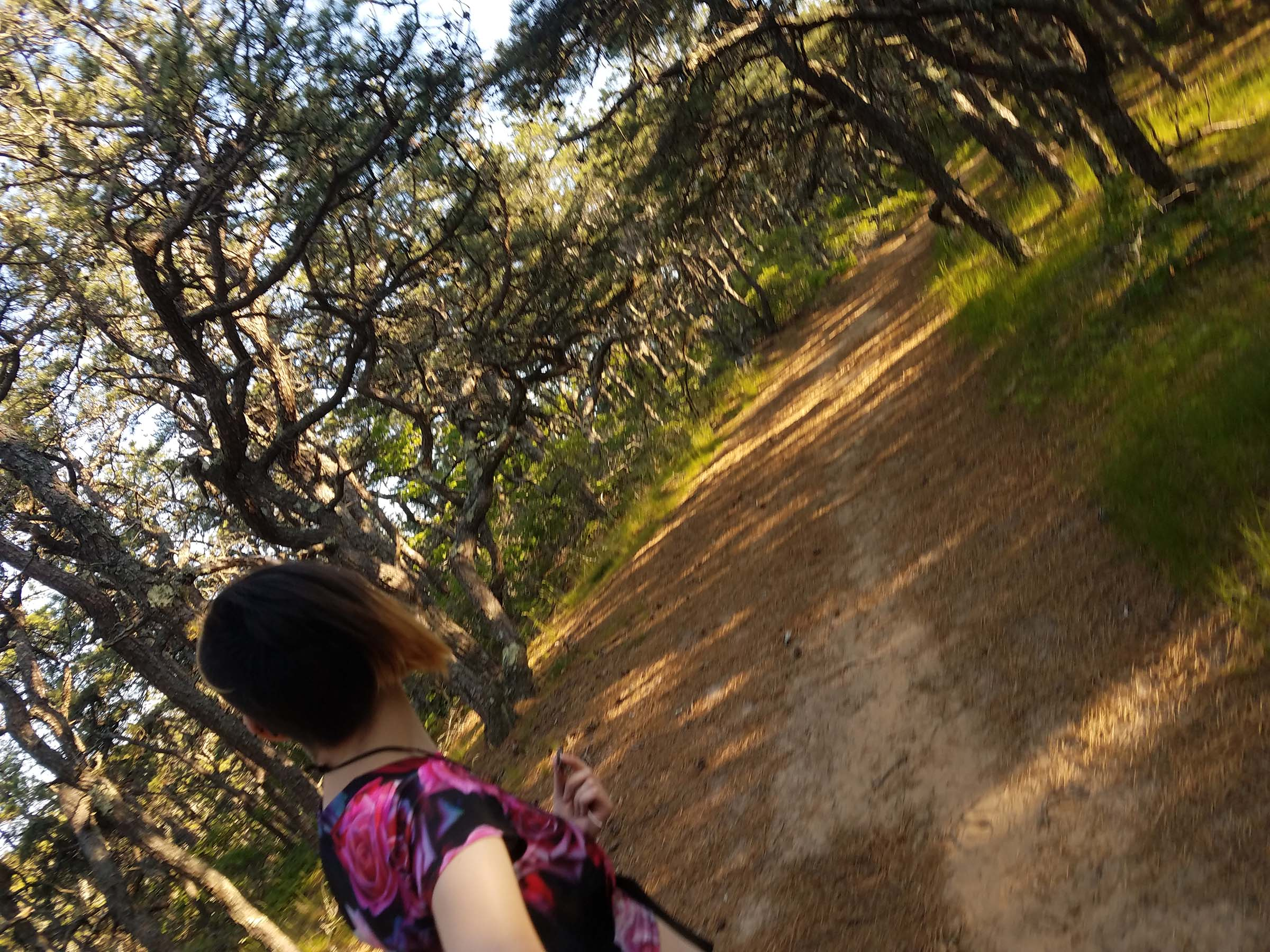 Photo, taken at an angle, looking down a shaded wooded path between twisting pine trees. A person in the foreground looks in the same direction, away from the camera.