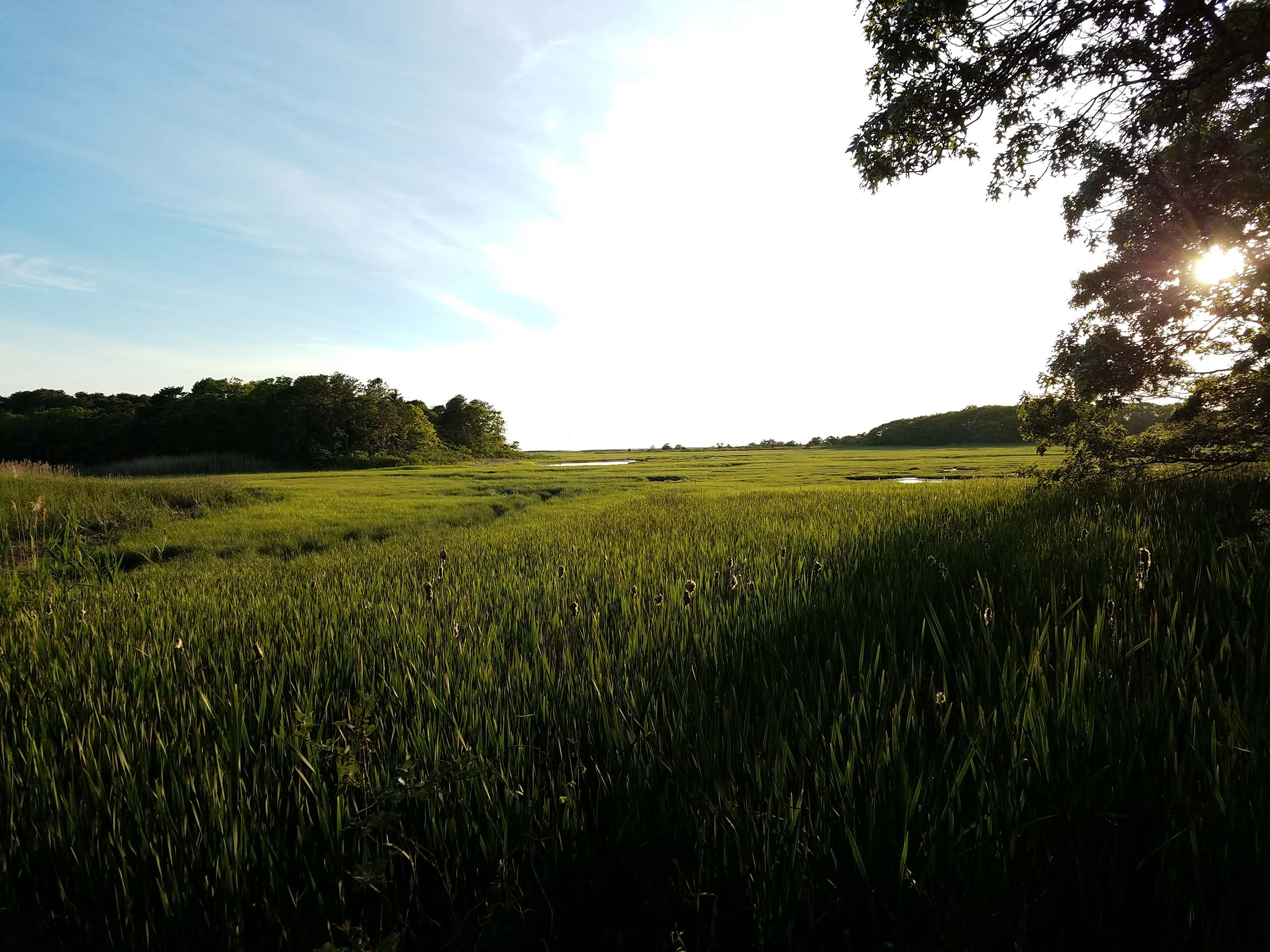 A photo of marshy grassland in the late afternoon, with the sun low in the sky. Some wooded areas are in the distance, and some tall trees are near the camera, but the landscape is otherwise just tall green grass and water.