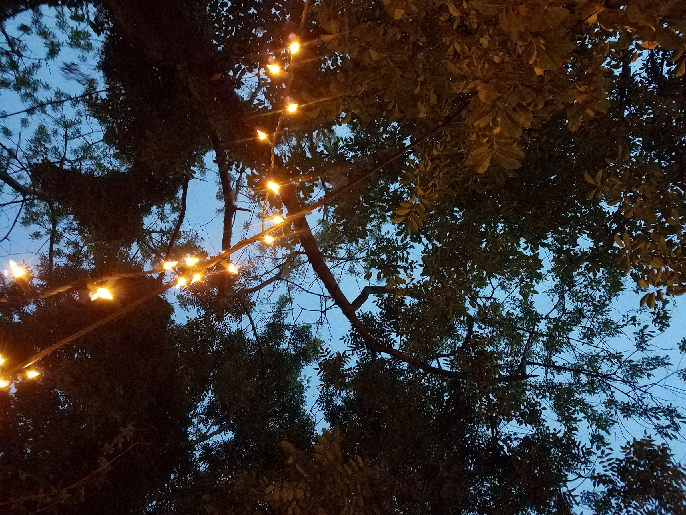 A photograph taken facing upward at a blue sky at dusk, through the branches and leaves of deciduous trees. A string of yellow faerie lights winds around a wire that crosses the view.