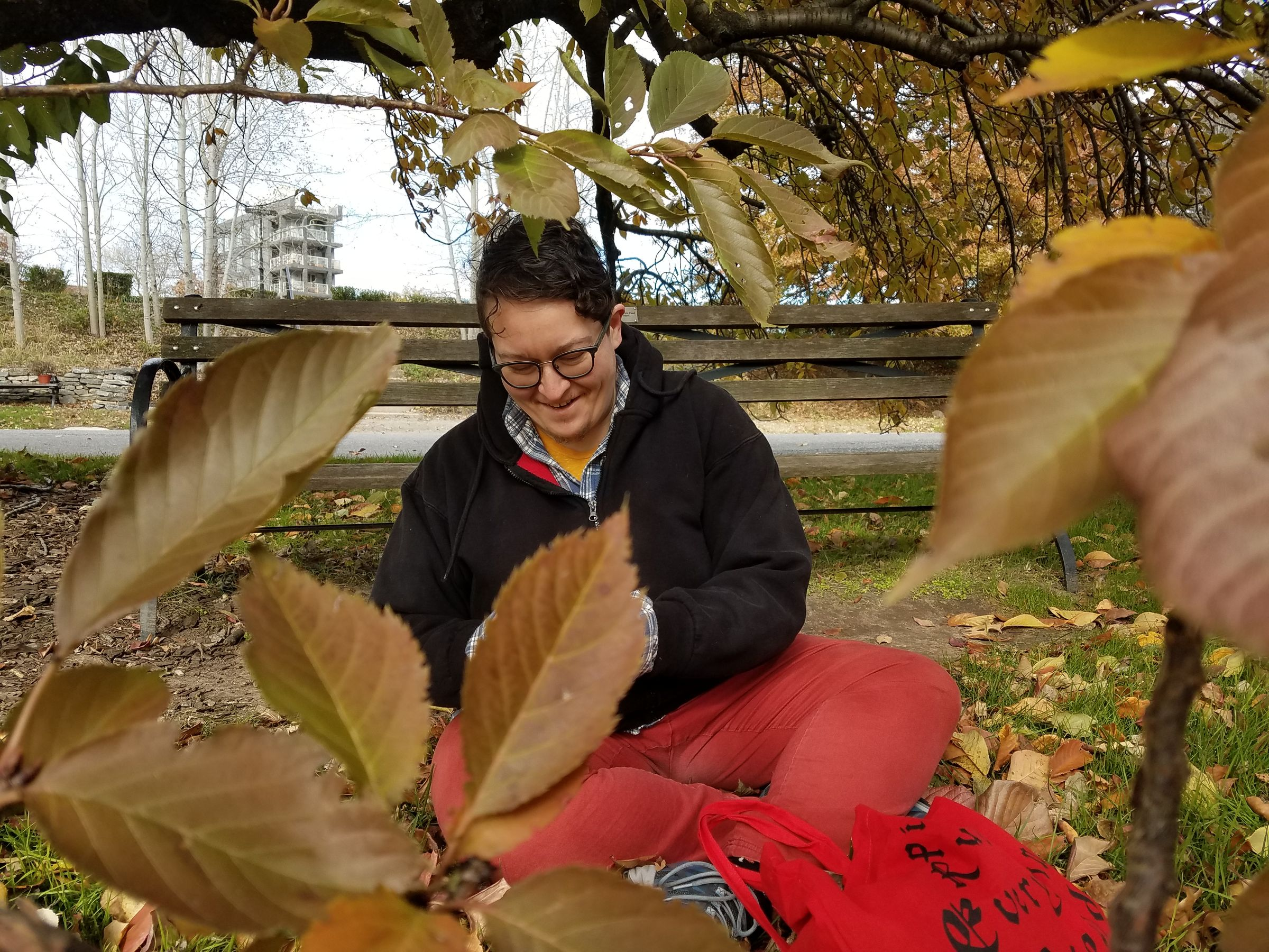 Photo, taken through some leafy branches, of a person sitting cross-legged on the ground under a drooping cherry tree branch. They are putting leaves into a red tote back at their feet.